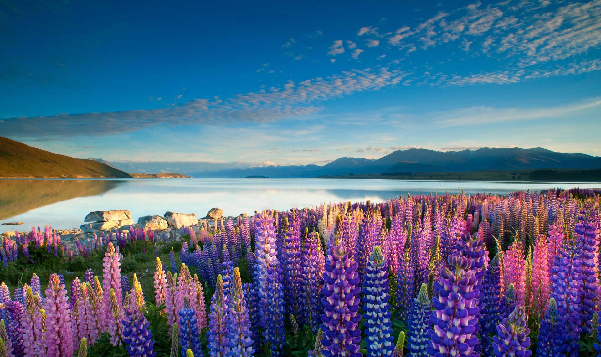 一生必须得去一次的【星空小镇】新西兰特卡波